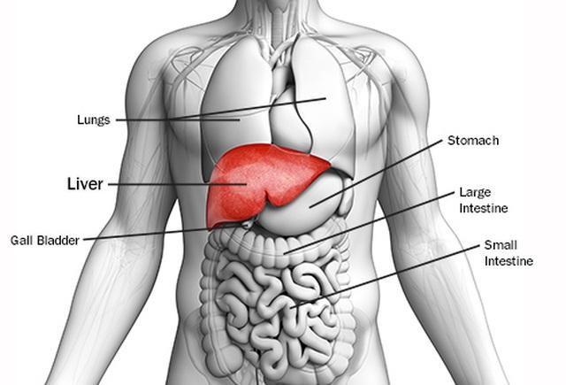 Điều trị ung thư gan bằng cách nhắm vào tế bào khỏe mạnh